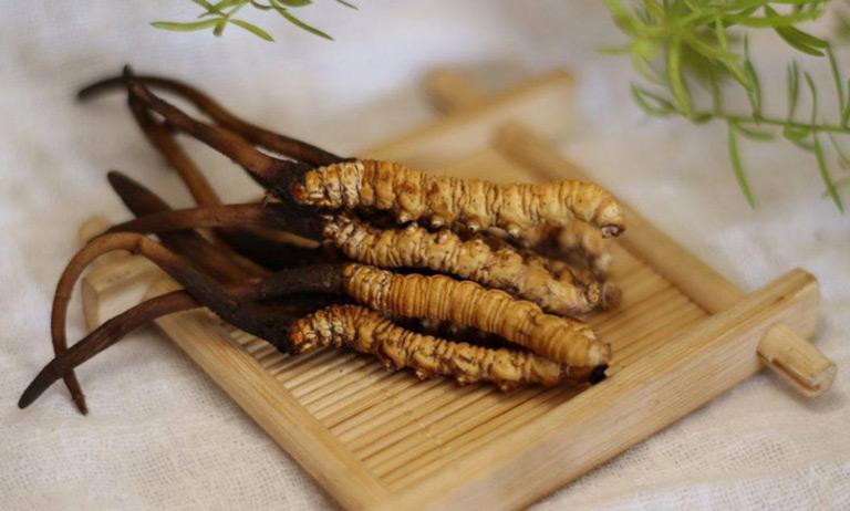 Đông trùng hạ thảo xuất xứ từ đâu - Biệt dược được tìm thấy đầu tiên ở Na Khúc Tây Tạng