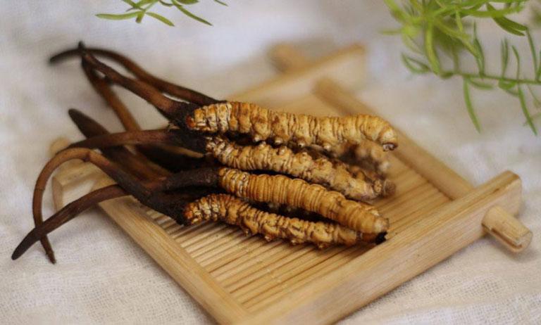 Đông trùng ăn ngủ ngon được bào chế từ đông trùng hạ thảo quý hiểm