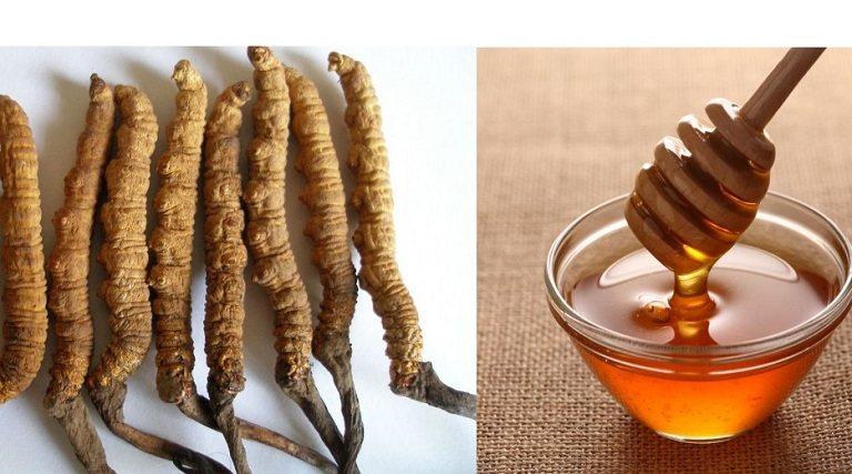 Đông trùng hạ thảo ngâm mật ong tạo nên thức uống bổ dưỡng