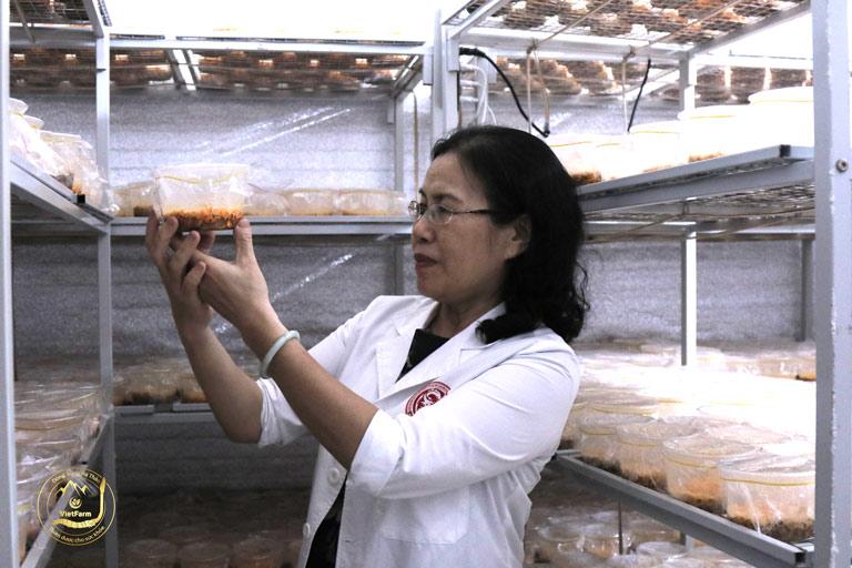 Vietfarm trang bị hệ thống cơ sở vật chất nuôi cấy đông trùng hiện đại