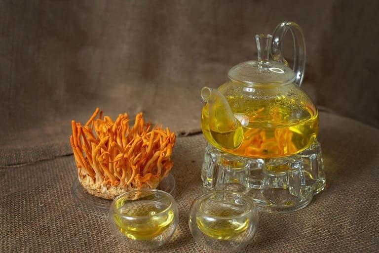 Uống trà đông trùng hạ thảo thường xuyên rất tốt cho sức khỏe