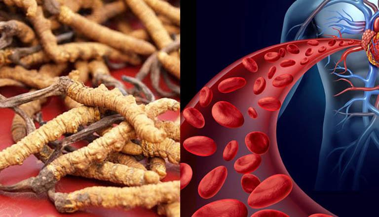 Tác dụng của đông trùng hạ thảo với người già, giúp lưu thông khí huyết, tim mạch