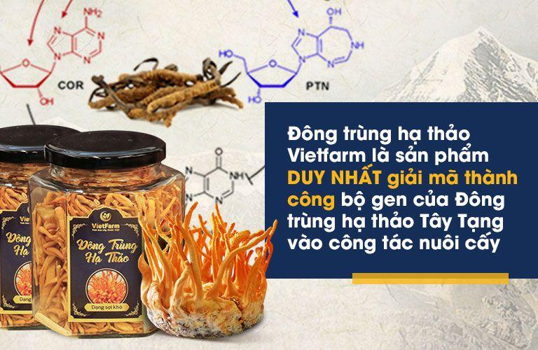Đông trùng hạ thảo Vietfarm có chất lượng tương đương đông trùng hạ thảo Tây Tạng