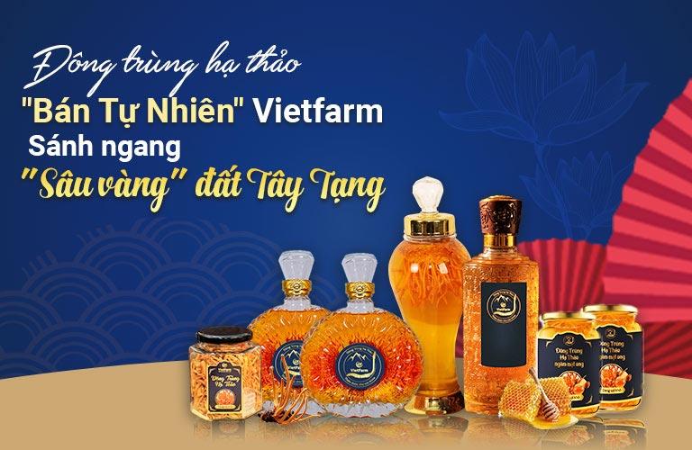 Đông trùng hạ thảo bán tự nhiên Vietfarm - Bước tiến đột phá, chất lượng sánh ngang đông trùng hạ thảo tự nhiên Tây Tạng